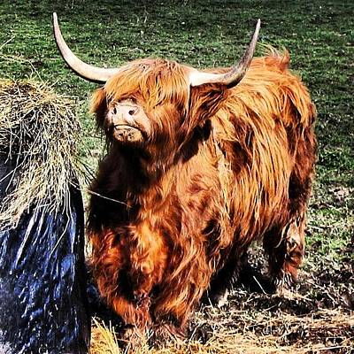 Cow Photograph - Highland's Cow by Luisa Azzolini