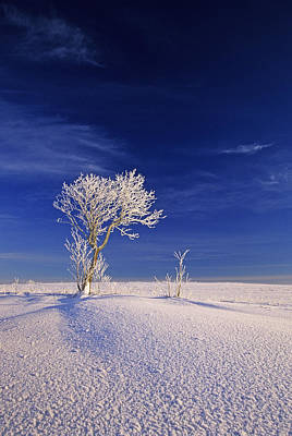 Hoar Frost On Trees, Bungay, Prince Art Print by John Sylvester