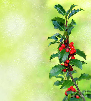 Holly Branch  Art Print by Carlos Caetano