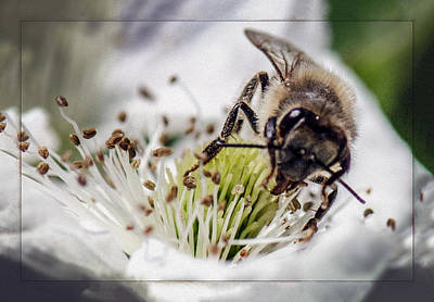 Photograph - Honey Bee by Gary Rose
