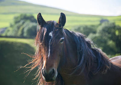 Photograph - Horse by Gouzel -