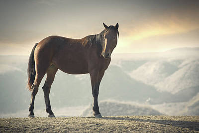 Kazakhstan Photograph - Horse In Wild by Arman Zhenikeyev - professional photographer from Kazakhstan