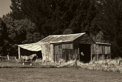 Photograph - Horses And Old Barn by Fran Woods