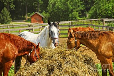 Animals Photos - Horses at the ranch 1 by Elena Elisseeva