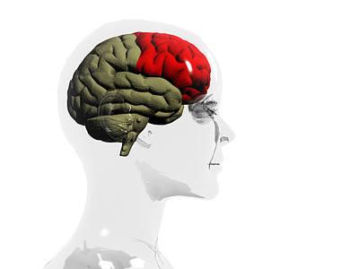 Human Brain, Frontal Lobe Art Print by Christian Darkin