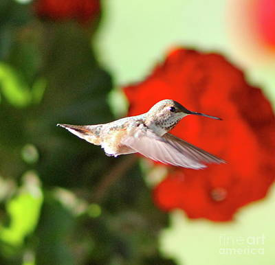 Hummingbird 4 Art Print