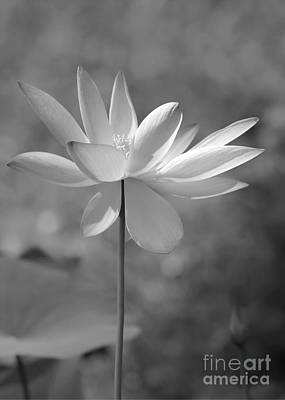 Photograph - I Love Lotus by Sabrina L Ryan