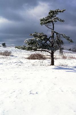 Iced Tree Shenandoah National Park Art Print by Thomas R Fletcher
