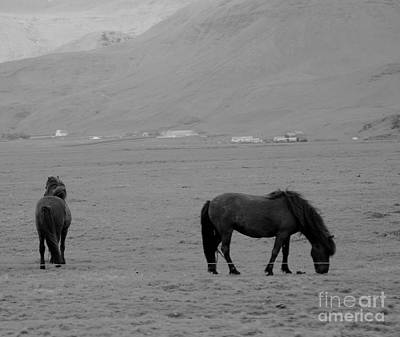 Painting - Icelandic Horses II by Louise Fahy
