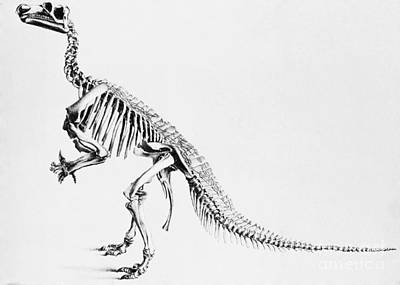 Photograph - Iguanodon, Mesozoic Dinosaur by Science Source