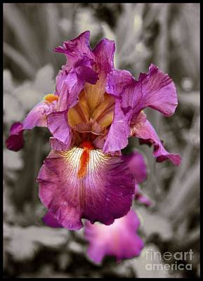 Digital Art - Iris Beauty by Fran Woods