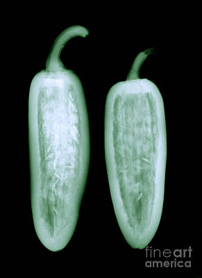 Photograph - Jalapeno by Ted Kinsman