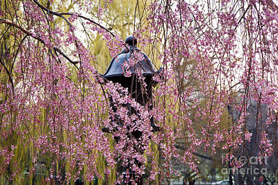 Photograph - Japanese Lantern by Susan Cole Kelly