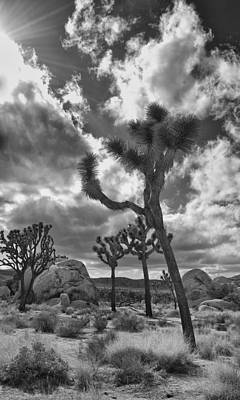 Photograph - Joshua Tree by Sandra Selle Rodriguez