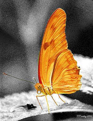 Julia Butterfly Art Print