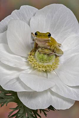 Photograph - Kermit by Susan Candelario