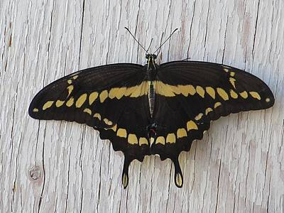 Kewl Moth Art Print