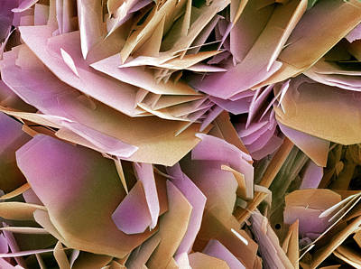 Calcium Oxalate Photograph - Kidney Stone Crystals, Sem by Steve Gschmeissner