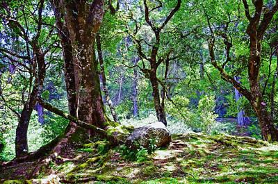 Kingdom Of The Trees. Peradeniya Botanical Garden. Sri Lanka Art Print by Jenny Rainbow