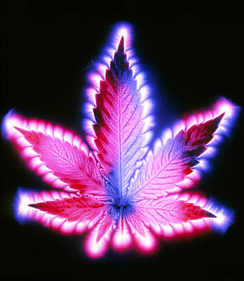 Kirlian Photograph Of A Leaf Of Cannabis Sativa Art Print by Garion Hutchings