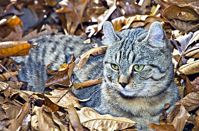 Art Print featuring the photograph Kitten In Leaves by Susan Leggett