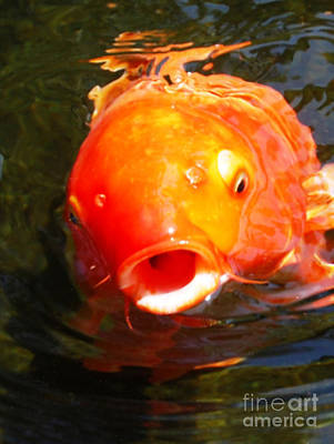 Photograph - Koi Fish by Angela Murray