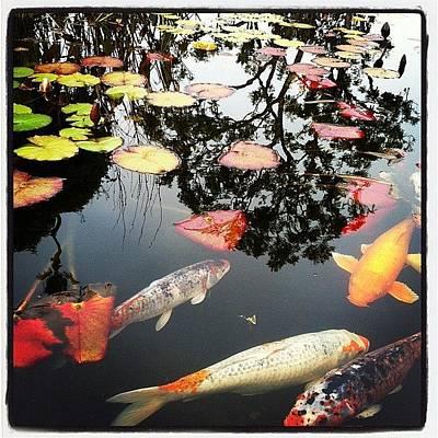 Koi Fish Photograph - Koi by Traci Lehman