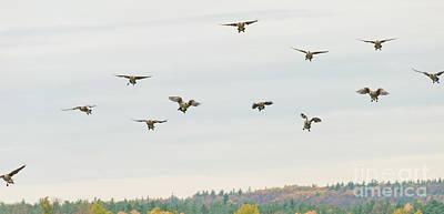 Photograph - Landing by Cheryl Baxter