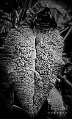 Black And White Photograph - Leaf by Tanya  Searcy