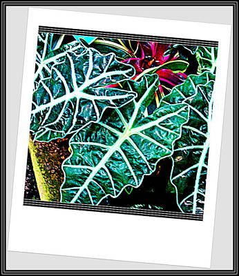 Photograph - Leafs by Anand Swaroop Manchiraju