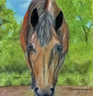 Lilly Art Print by Teresa Vecere