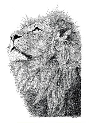 Drawing - Lion by Scott Woyak