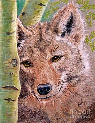 Colored Pencil Drawing - Lobo by Marilyn Smith
