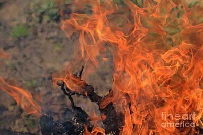 Log Fire And Flames Art Print by Sami Sarkis