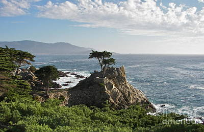Photograph - Lone Cypress by Carol  Bradley