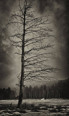 Photograph - Lone Pine by Steven Mancinelli