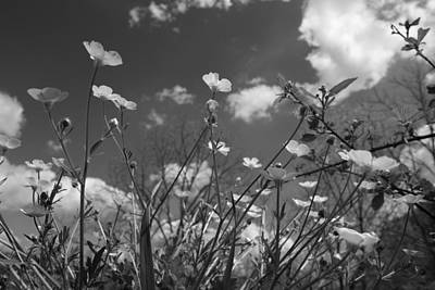 White And Black Landscapes Photograph - Looking Up  by Betsy Knapp