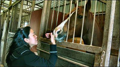 Photograph - Lorna - Horse 2009 by Glenn Bautista