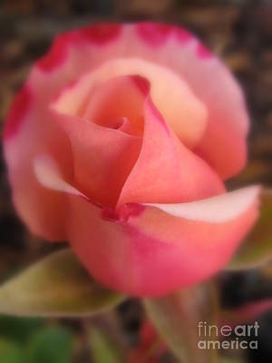 Pink Photograph - Love by Tina Marie