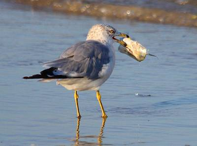 Photograph - Lunch Time by Jeanne Andrews