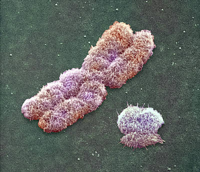 Male Sex Chromosomes, Sem Art Print by Power And Syred