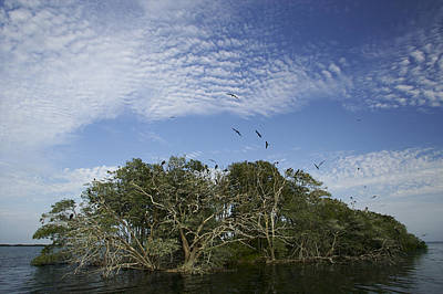Man-of-war Cay Is A Protected Mangrove Art Print