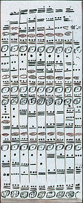 Dresden Codex Photograph - Mayan Number System, Codex Dresdensis by Photo Researchers