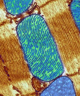 Mitochondrion, Tem Art Print