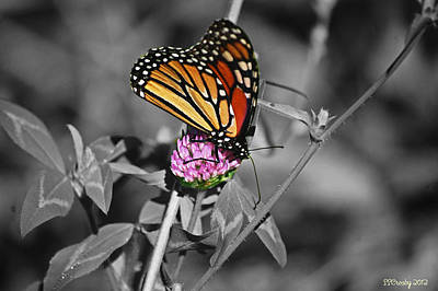 Monarch Butterfly On Clover Art Print
