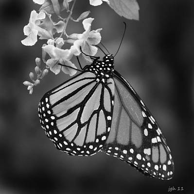 Photograph - Monarch  by Joseph G Holland