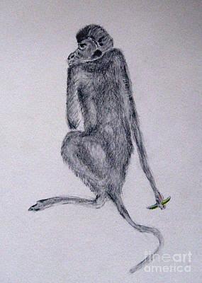 Drawing - Monkey by Patricia Januszkiewicz