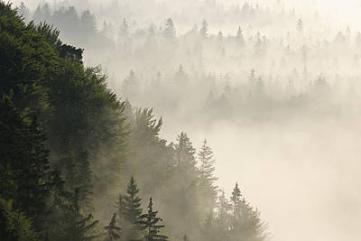 Y120817 Photograph - Morning Mist In Forest, Isar Valley, Wolfratshausen, Upper Bavaria, Bavaria, Germany by Martin Ruegner