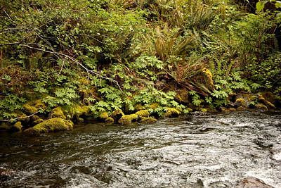 Photograph - Mossy Riverbank by Carol Groenen