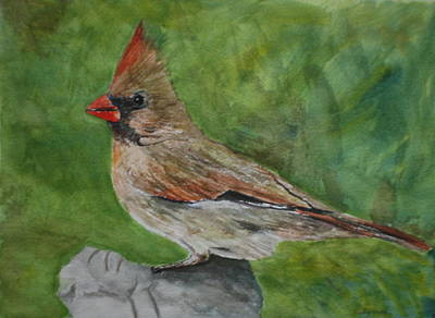 Painting - Mrs. Cardinal by Betty-Anne McDonald